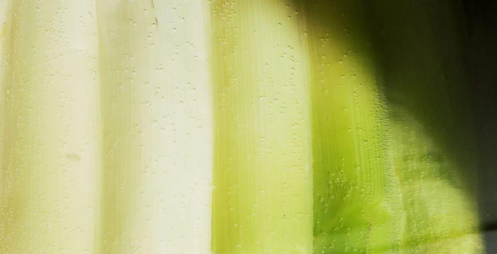 IMG 20190413 192248 01 1024x524 - Poireaux + vinaigrette = amour éternel
